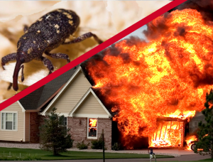 Огне- и биозащита